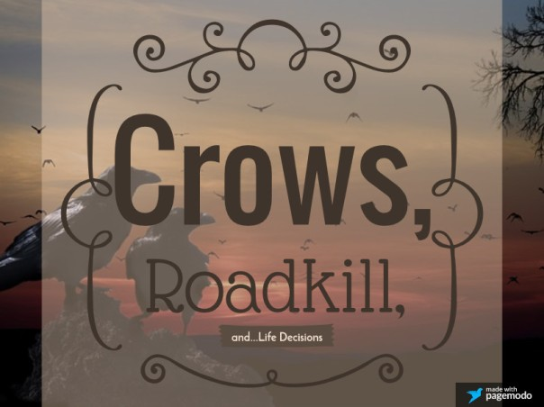 Crows, Roadkill, and...Life Decisions